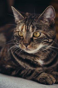 cat-3523992__340.jpg