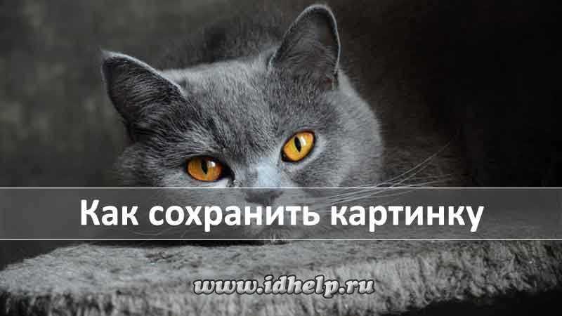 kak_sohranit_kartinku.jpg